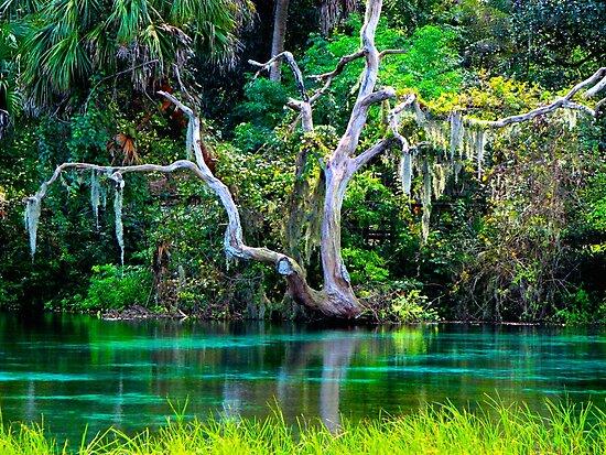 Emerald Paradise, Rainbow Springs Florida by NatureGreeting Cards ©ccwri