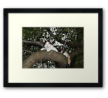 I Can Do Anything That My Big Brother Mishu Can Do Framed Print
