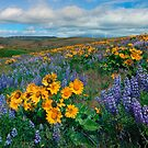 Central Washington Spring by DawsonImages
