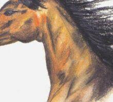 Wild and Free - stallion Sticker