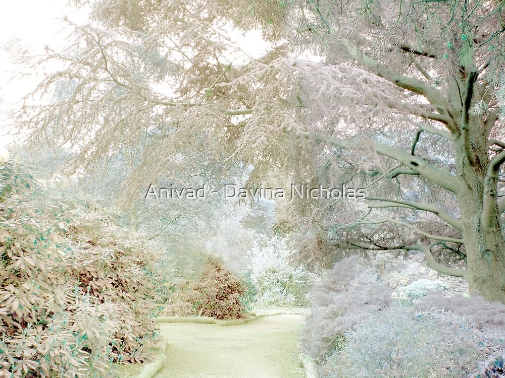 Frosty Morning by Anivad - Davina Nicholas