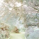 Frosty Morning by Anivad - Davina Nicholas
