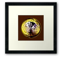 Paperweight Hibiscus Framed Print