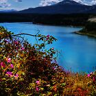 Wild Roses on Schwatka Lake by Yukondick