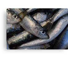 Sardines background Canvas Print