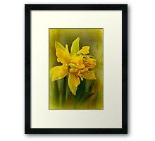 Old Fashioned Daffodil Framed Print