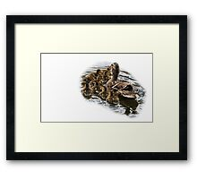 Swimming With Mama! Framed Print