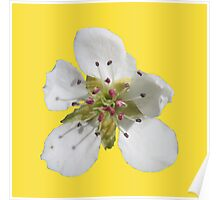 a peach blossom on buttercup background Poster