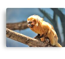 little monkey Canvas Print