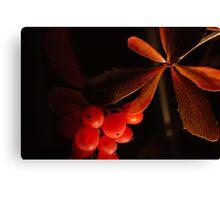 Leaves & berries Canvas Print