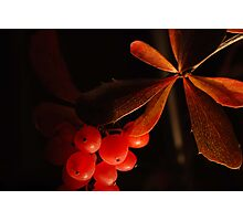 Leaves & berries Photographic Print