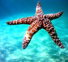 Starfish by Ryan Goff