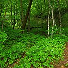 Minneopa State Park Forest 1 by Robin Clifton