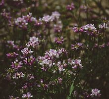 Westmeadow Floral  by Bethany Helzer