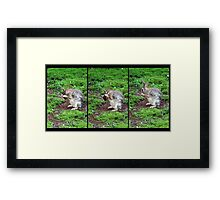 The Wise Bunny Framed Print