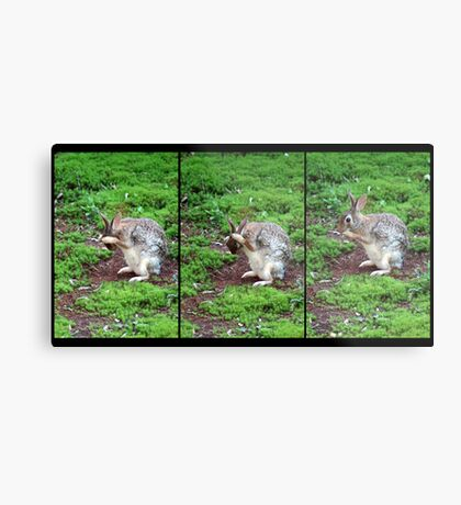 The Wise Bunny Metal Print
