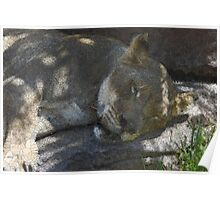 Sleeping Lioness in Stained Glass Poster