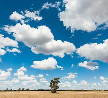 Outback Field by Mark Eden