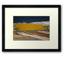 Vineyard, Richmond, Tasmania Framed Print