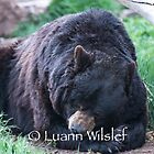 Napping by Luann wilslef