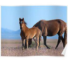 Frisky Foal Poster