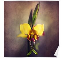 Fine Art Donkey Orchid Poster