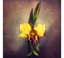 Fine Art Donkey Orchid Photographic Print