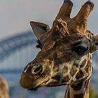Giraffe I by Adam Le Good