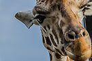 "Giraffe II: ""Whatchu looking at?"" by Adam Le Good"