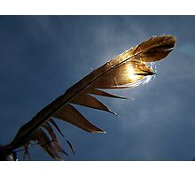 Magpie feather Photographic Print