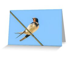 High Wire Act, swallow, County Kilkenny, Ireland Greeting Card