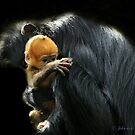 Mother Francois Langur and baby by John44