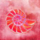 pink wash nautilus by Fran E.