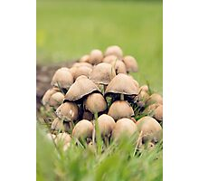 Fungi Collective Photographic Print