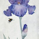 Blue Iris with Bee by Ray Shuell