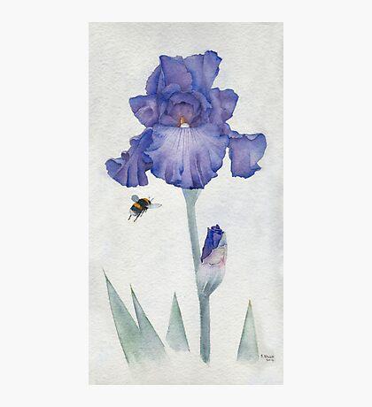 Blue Iris with Bee Photographic Print