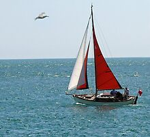 Red sail by TINABURKE