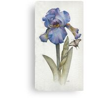 Blue Iris with Swallowtail Butterfly Canvas Print