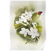 Jasmine with Ladybird Poster