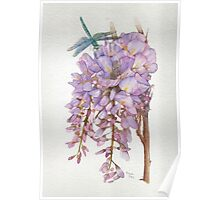 Wisteria Flower with Blue and Green Dragonfly Poster