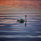 Swan Lake Abstract by LadyFi