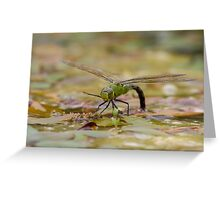 Dragonfly - Low Level Greeting Card