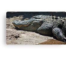 gator 001 Canvas Print