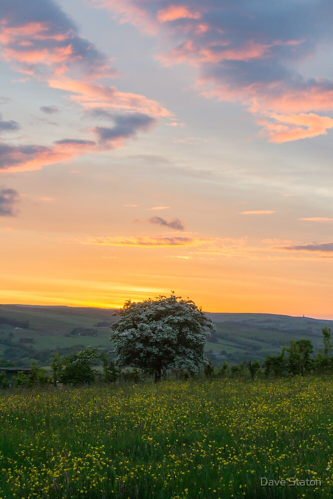 Hawthorn Sunset. by Dave Staton