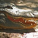 Gator 006 by joeschmoe96