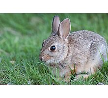 Bunny in the grass Photographic Print