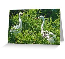Rookery 10 Greeting Card