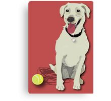 yellow lab with tennis ball Canvas Print