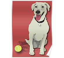 yellow lab with tennis ball Poster