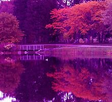 Purple Haze Panorama by Vicki Spindler (VHS Photography)